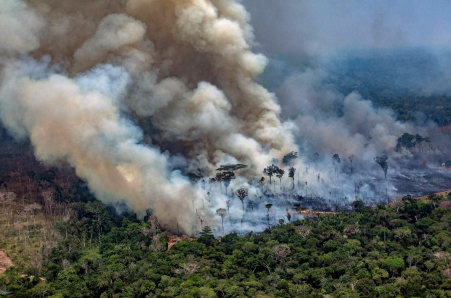 Photo Courtesy of: https://www.nbcnews.com/mach/science/why-amazon-rainforest-important-ncna1051401