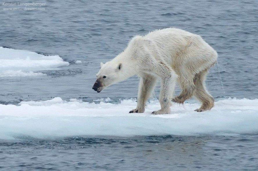 Global Warming Impact