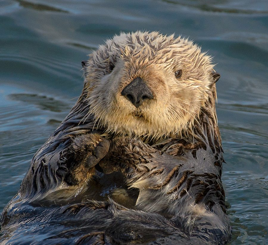 Im Not Like the Otters