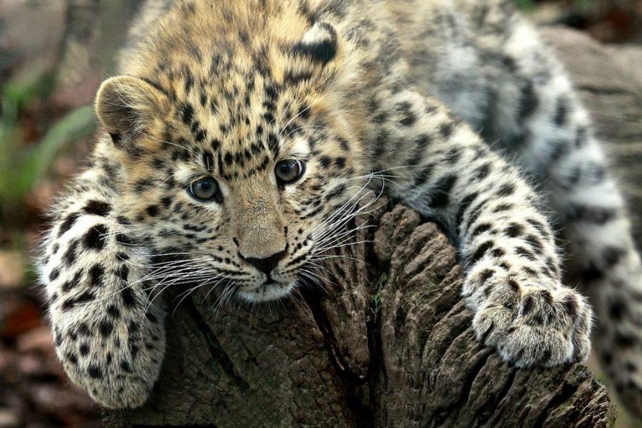 Extinct & Endangered Species