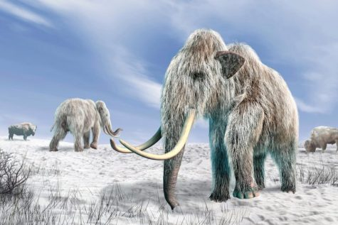Photo Courtesy of: https://scitechdaily.com/controversial-theory-on-extinction-of-ice-age-animals-supported-by-new-evidence/